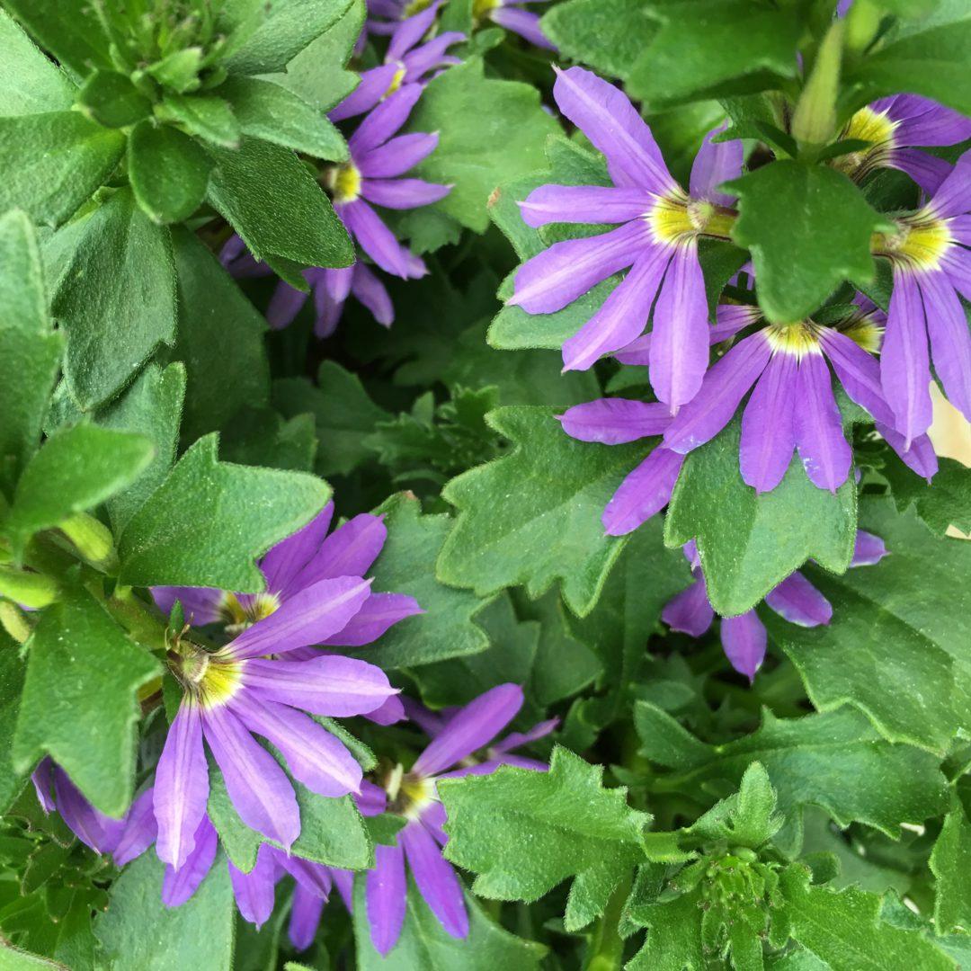 Easy garden pots, purple garden pots, large planters, garden planters, summer pots, summer planters, sunshine planters, sunshine pots