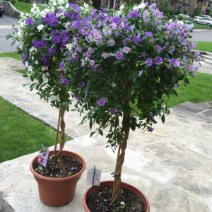 Easy garden pots, purple garden pots, large planters, garden planters, summer pots, summer planters, sunshine planters, sunshine pots, gardening, front door pots