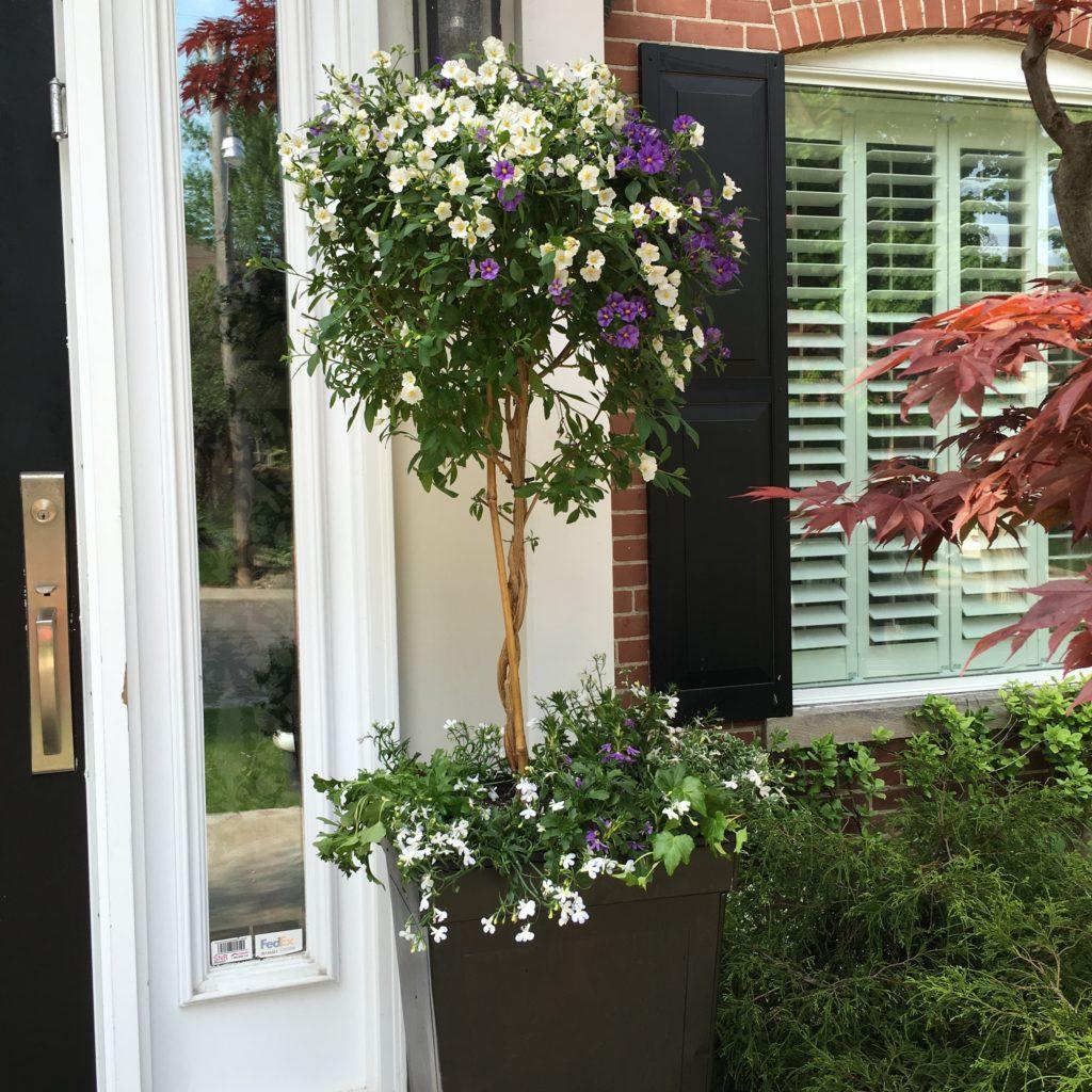 Easy Garden Pots, Purple Garden Pots, Large Planters, Garden Planters,  Summer Pots
