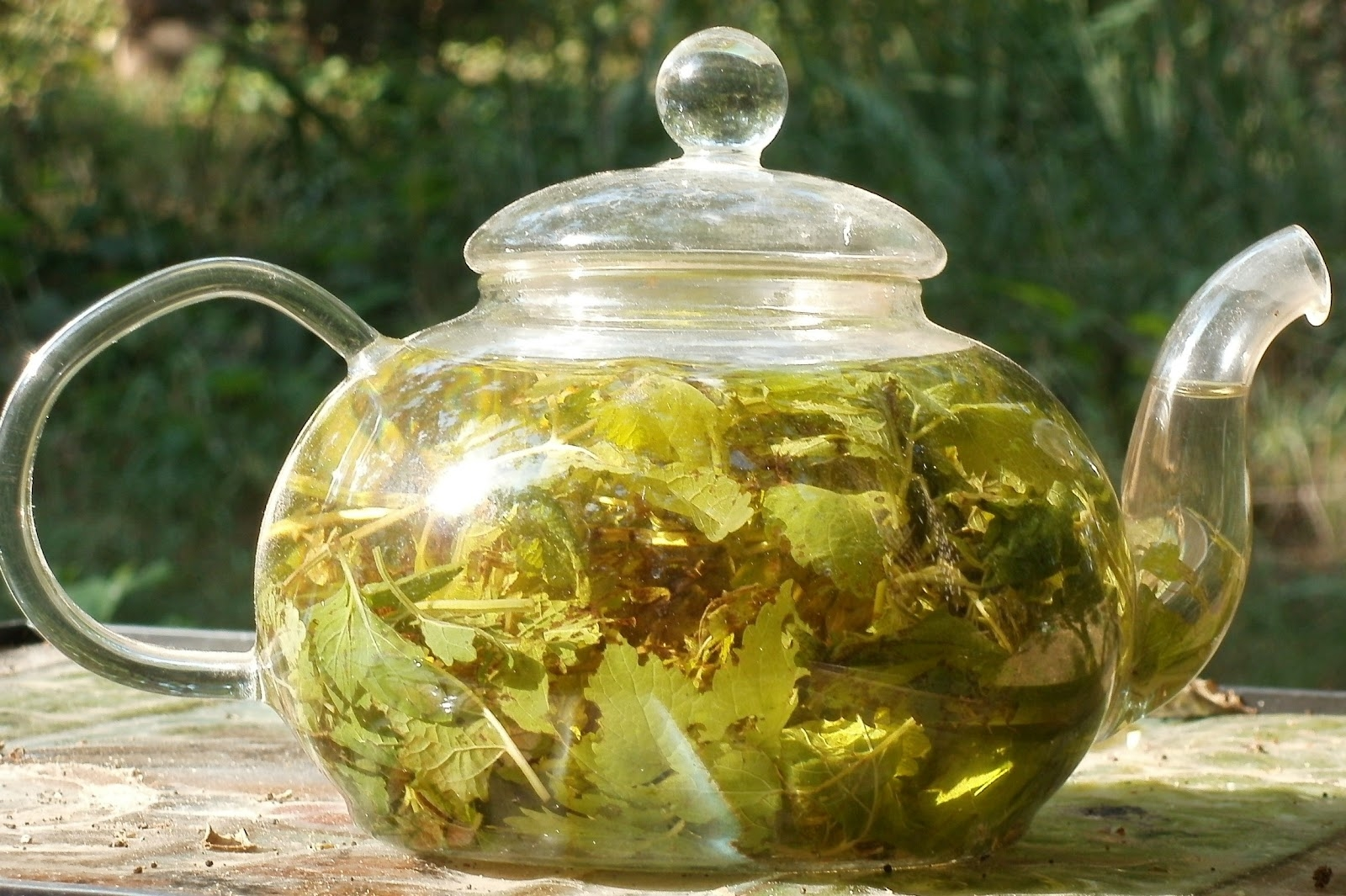 medicinal plants, herbal medicine